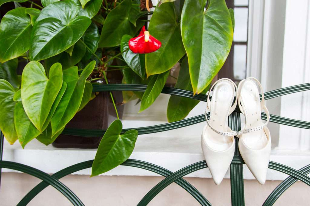 Brides shoes hanging on a green bench with a plant in the background